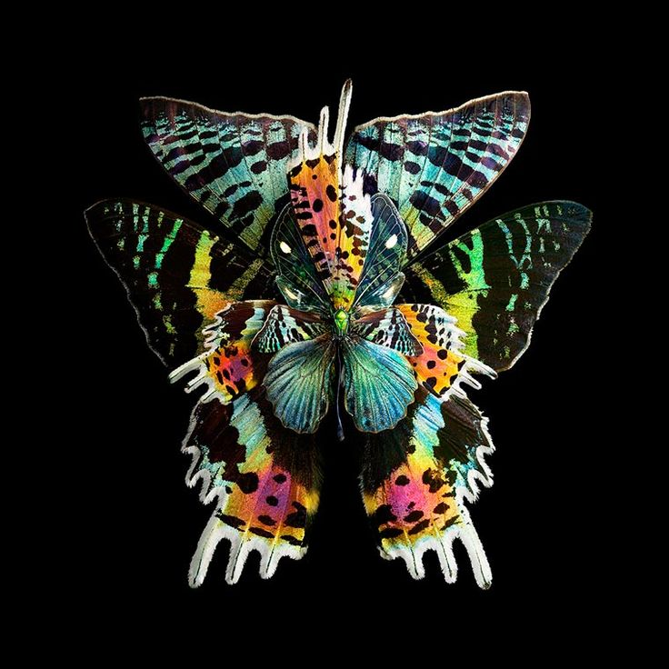 053a95d02adbcb4bf155c3b2b28d2f8e butterfly wings butterfly images