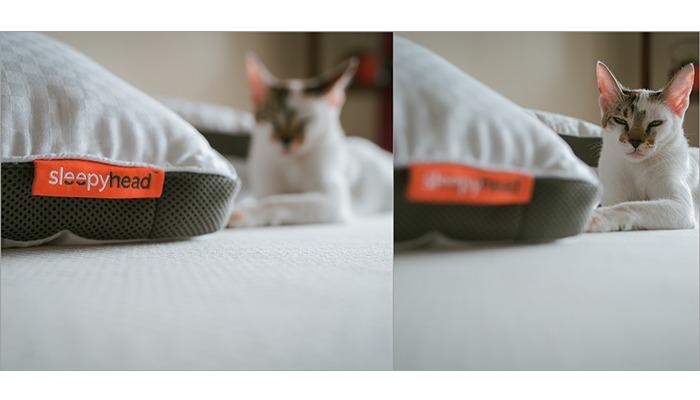sleepyhead mattress memory foam review cat photoshoot