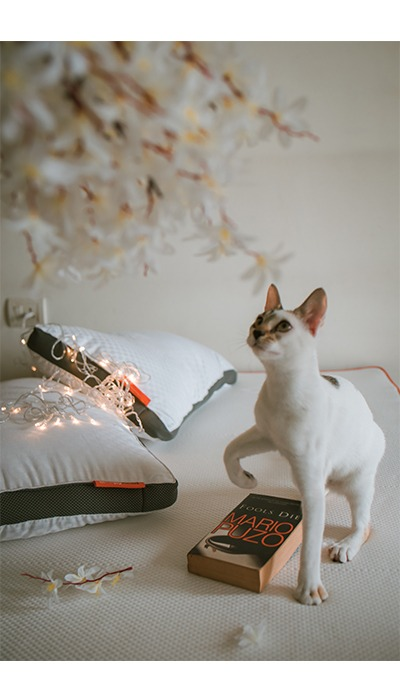 sleepyhead white cat mattress photoshoot
